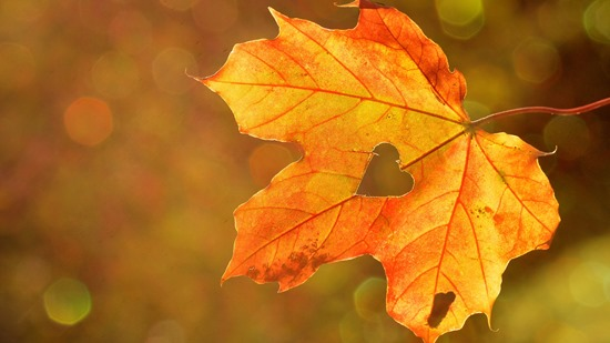 maple_leaf_autumn_heart_113248_3840x2160